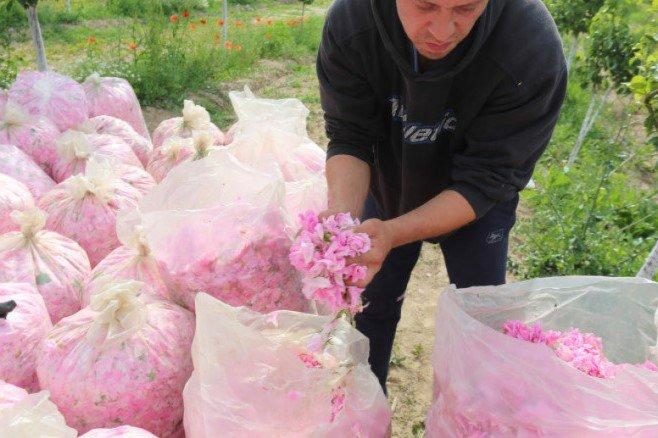 Субсидии за розите: Производителите ще бъдат компенсирани по мярка Covid-19