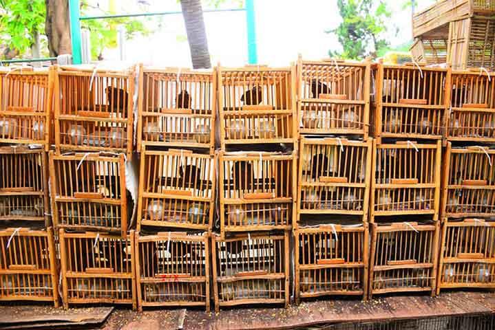 Бубонна чума в Китай, забраниха лова и яденето на животни