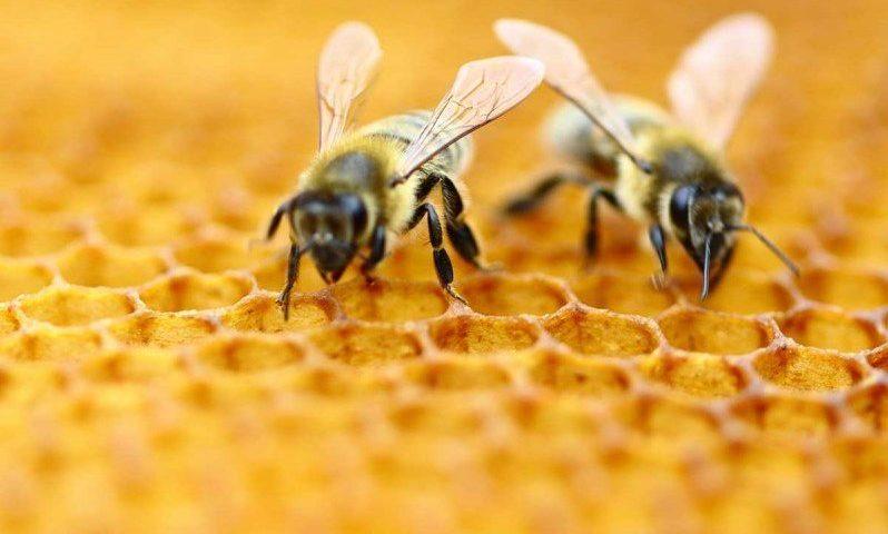 Внимание: Пръскат срещу насекоми в Карлово, пазете пчелите