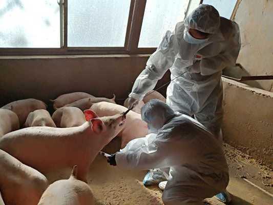 16 млн. лв, за фермерите, пострадали от острите заразни заболявания по животните в последните години