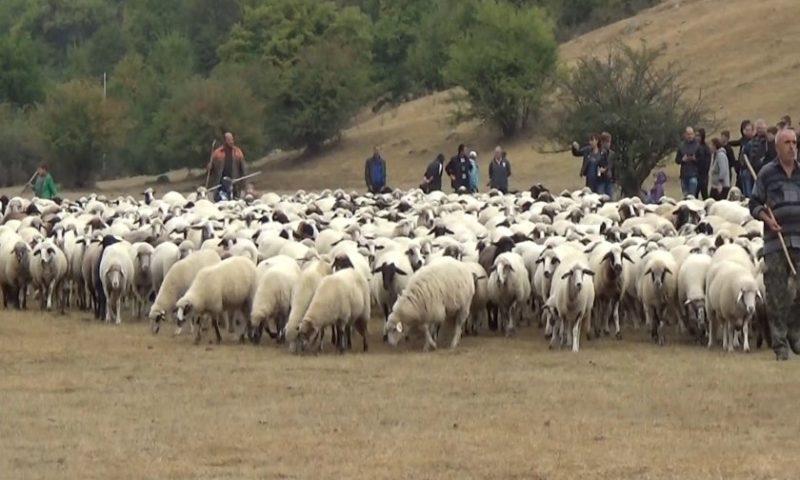 Национален събор за опазване на българските породи животни се проведе край Калофер/ВИДЕО/