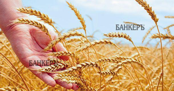 Цената на земеделската земя се е понижила през август