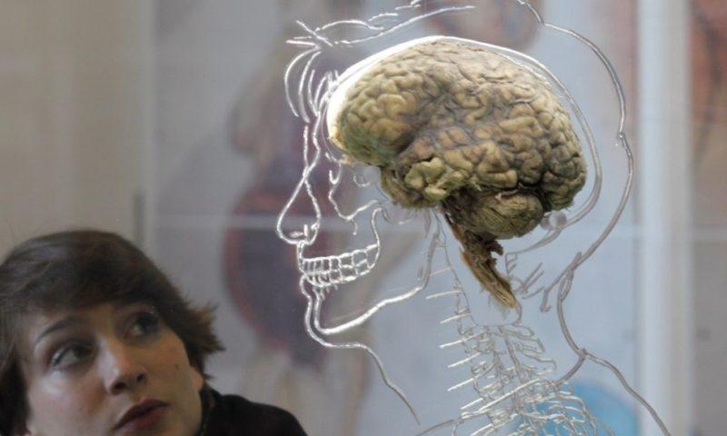 Съвременният човешки мозък е възникнал в Африка преди около 1,7 милиона години
