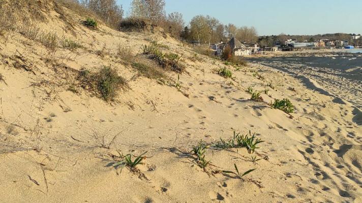 """Допълнителни действия по проверката на плаж """"Смокиня"""""""
