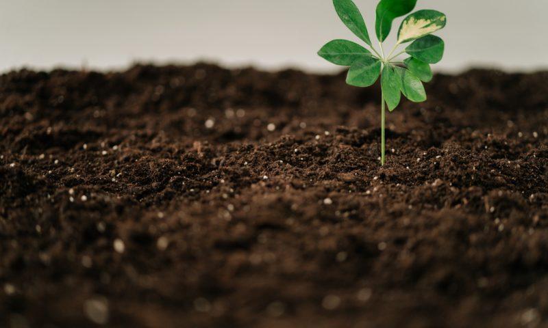 Торове за отглеждане на растения на открито и закрито