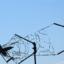 Ген. Събев с шокираща хипотеза за разбилия се в Черно море МиГ-29